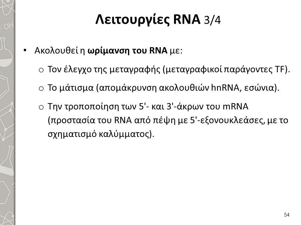 Λειτουργίες RNA 3/4 Ακολουθεί η ωρίμανση του RNA με: o Τον έλεγχο της μεταγραφής (μεταγραφικοί παράγοντες ΤF). o Το μάτισμα (απομάκρυνση ακολουθιών hn