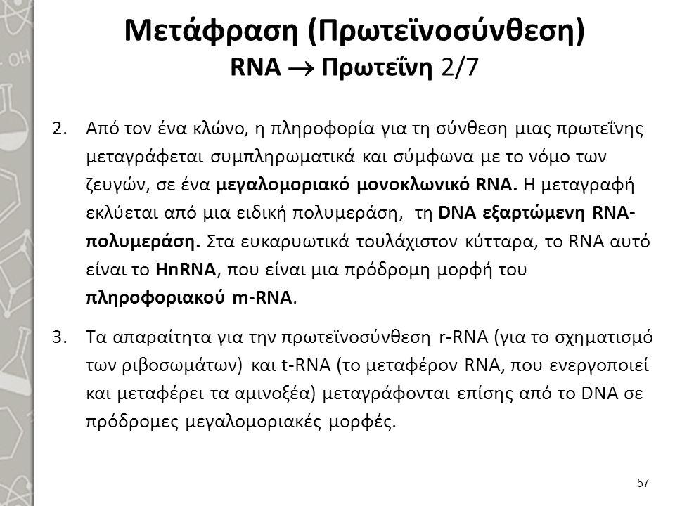 Μετάφραση (Πρωτεϊνοσύνθεση) RNA  Πρωτεΐνη 2/7 2.Από τον ένα κλώνο, η πληροφορία για τη σύνθεση μιας πρωτεΐνης μεταγράφεται συμπληρωματικά και σύμφωνα
