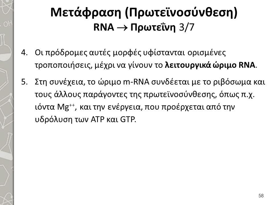 Μετάφραση (Πρωτεϊνοσύνθεση) RNA  Πρωτεΐνη 3/7 4.Οι πρόδρομες αυτές μορφές υφίστανται ορισμένες τροποποιήσεις, μέχρι να γίνουν το λειτουργικά ώριμο RN