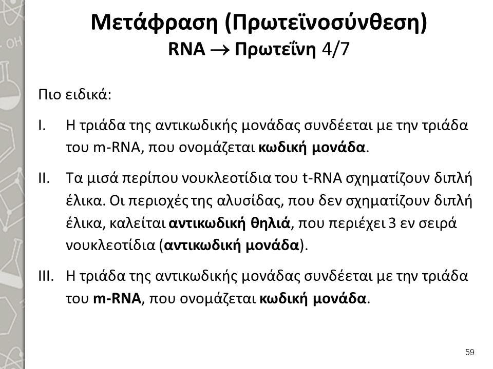 Μετάφραση (Πρωτεϊνοσύνθεση) RNA  Πρωτεΐνη 4/7 Πιο ειδικά: I.Η τριάδα της αντικωδικής μονάδας συνδέεται με την τριάδα του m-RNA, που ονομάζεται κωδική