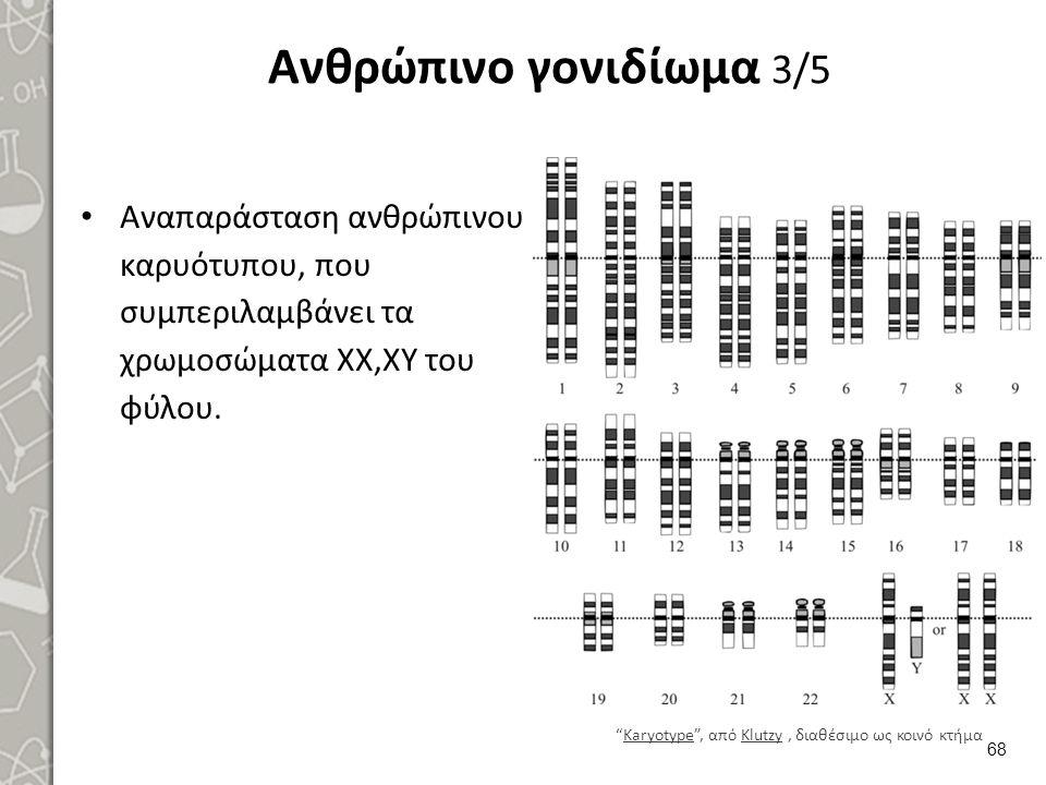 """Ανθρώπινο γονιδίωμα 3/5 Αναπαράσταση ανθρώπινου καρυότυπου, που συμπεριλαμβάνει τα χρωμοσώματα ΧΧ,ΧΥ του φύλου. 68 """"Karyotype"""", από Klutzy, διαθέσιμο"""