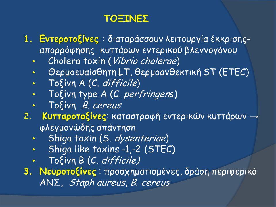 ΤΟΞΙΝΕΣ 1. Εντεροτοξίνες 1. Εντεροτοξίνες : διαταράσσουν λειτουργία έκκρισης- απορρόφησης κυττάρων εντερικού βλεννογόνου Cholera toxin (Vibrio cholera