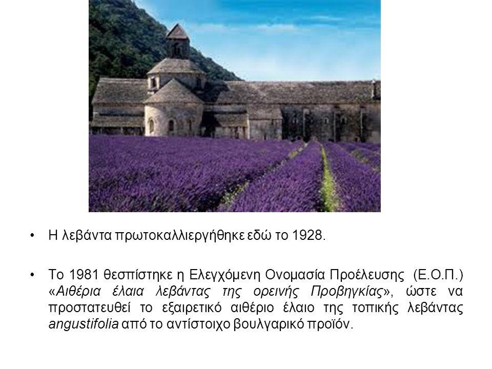 Η λεβάντα πρωτοκαλλιεργήθηκε εδώ το 1928. Το 1981 θεσπίστηκε η Ελεγχόμενη Ονομασία Προέλευσης (Ε.Ο.Π.) «Αιθέρια έλαια λεβάντας της ορεινής Προβηγκίας»