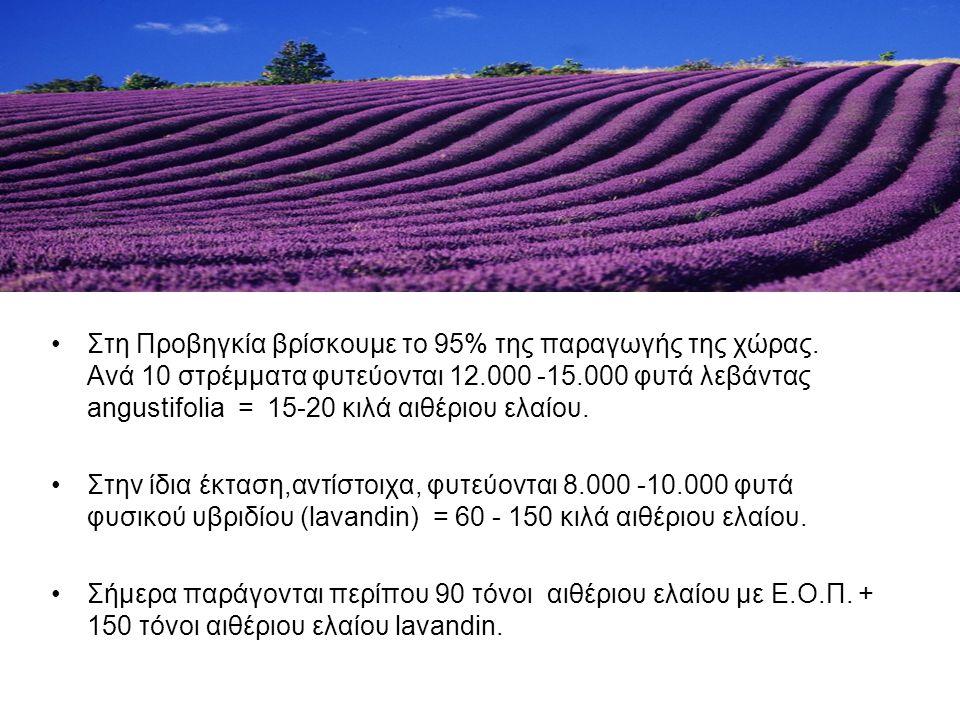 Στη Προβηγκία βρίσκουμε το 95% της παραγωγής της χώρας. Ανά 10 στρέμματα φυτεύονται 12.000 -15.000 φυτά λεβάντας angustifolia = 15-20 κιλά αιθέριου ελ