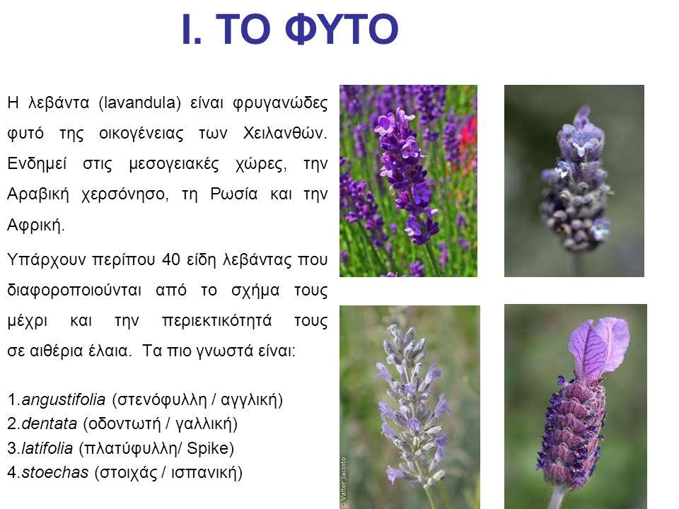 Η λεβάντα (lavandula) είναι φρυγανώδες φυτό της οικογένειας των Χειλανθών. Ενδημεί στις μεσογειακές χώρες, την Αραβική χερσόνησο, τη Ρωσία και την Αφρ