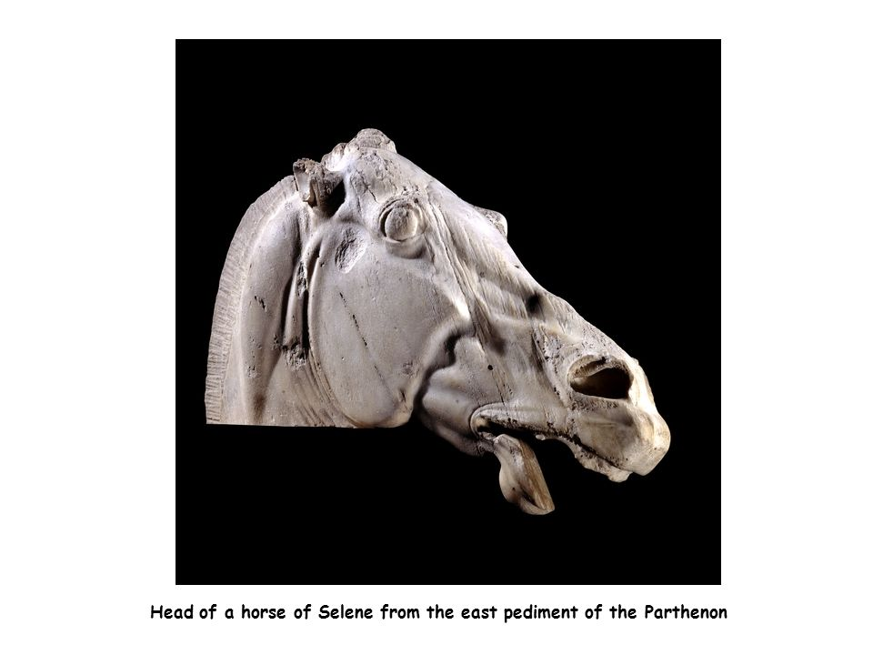 Head of a horse of Selene from the east pediment of the Parthenon