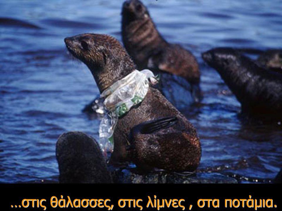 Καταλήγουν στη θάλασσα μέσω των υπονόμων και των αποχετευτικών δικτύων.