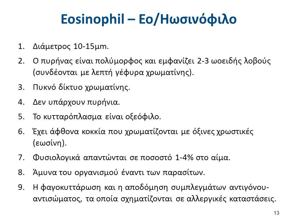 Eosinophil – Εο/Ηωσινόφιλο 1.Διάμετρος 10-15μm. 2.Ο πυρήνας είναι πολύμορφος και εμφανίζει 2-3 ωοειδής λοβούς (συνδέονται με λεπτή γέφυρα χρωματίνης).