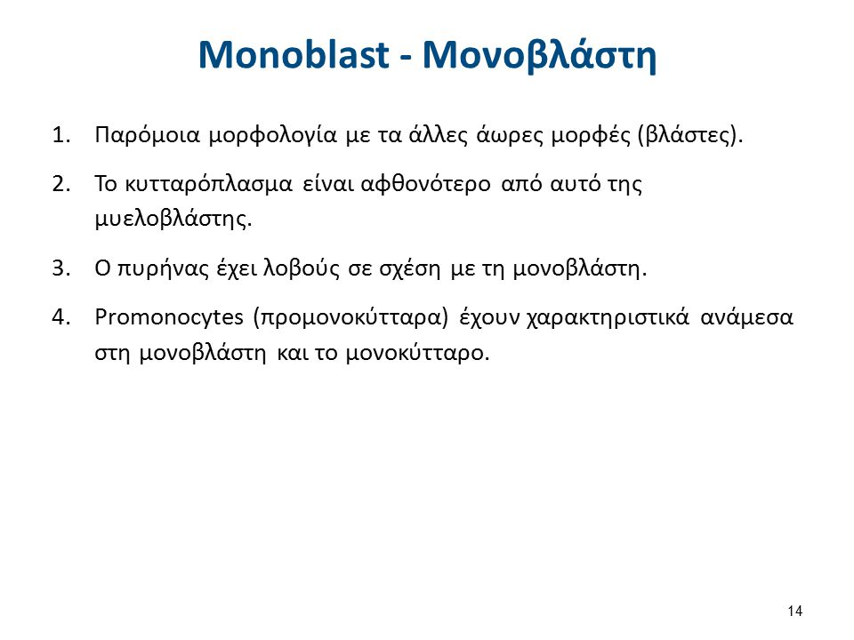Monoblast - Moνοβλάστη 1.Παρόμοια μορφολογία με τα άλλες άωρες μορφές (βλάστες). 2.Το κυτταρόπλασμα είναι αφθονότερο από αυτό της μυελοβλάστης. 3.Ο πυ