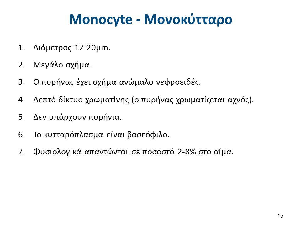 Monocyte - Μονοκύτταρο 1.Διάμετρος 12-20μm. 2.Μεγάλο σχήμα. 3.Ο πυρήνας έχει σχήμα ανώμαλο νεφροειδές. 4.Λεπτό δίκτυο χρωματίνης (ο πυρήνας χρωματίζετ