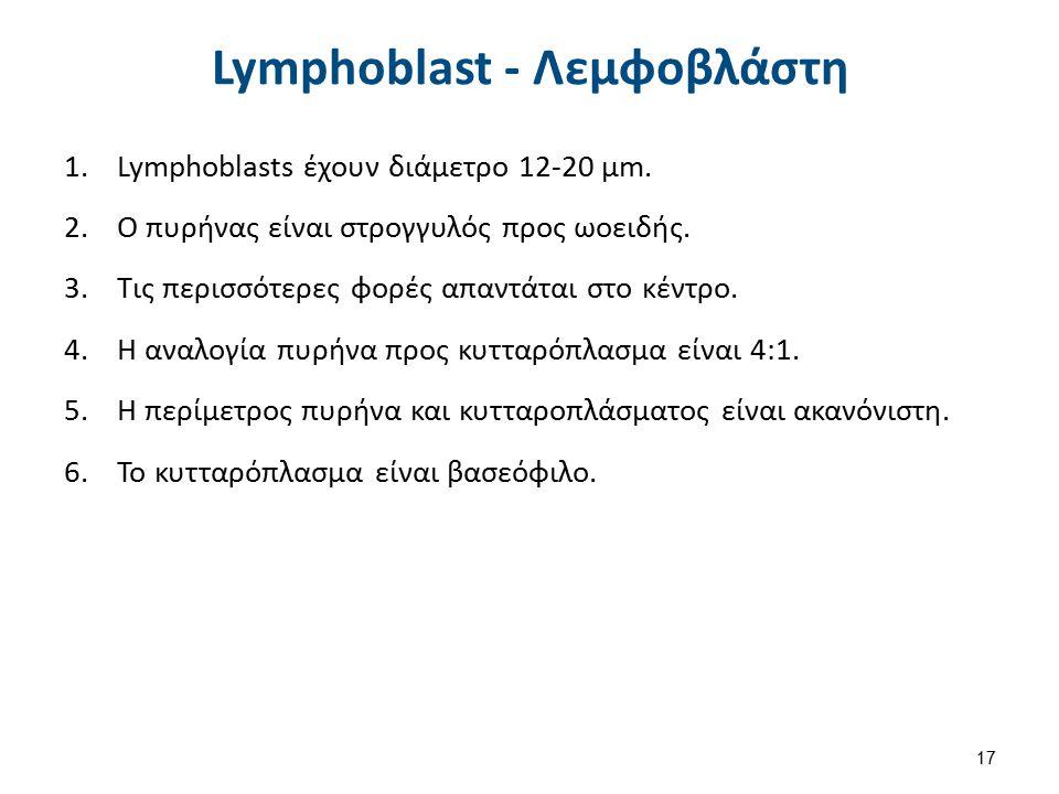 Lymphoblast - Λεμφοβλάστη 1.Lymphoblasts έχουν διάμετρο 12-20 µm. 2.Ο πυρήνας είναι στρογγυλός προς ωοειδής. 3.Τις περισσότερες φορές απαντάται στο κέ