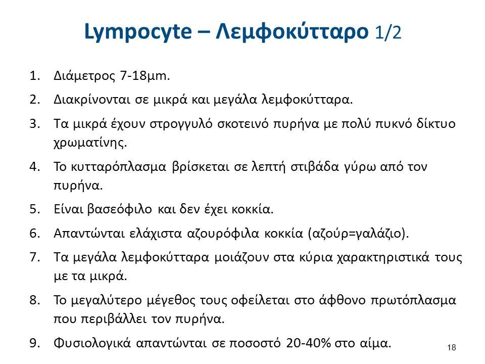 Lympocyte – Λεμφοκύτταρο 1/2 1.Διάμετρος 7-18μm. 2.Διακρίνονται σε μικρά και μεγάλα λεμφοκύτταρα. 3.Τα μικρά έχουν στρογγυλό σκοτεινό πυρήνα με πολύ π