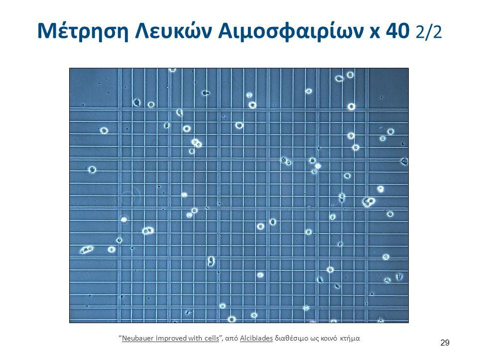 """Μέτρηση Λευκών Αιμοσφαιρίων x 40 2/2 29 """"Neubauer improved with cells"""", από Alcibiades διαθέσιμο ως κοινό κτήμαNeubauer improved with cellsAlcibiades"""
