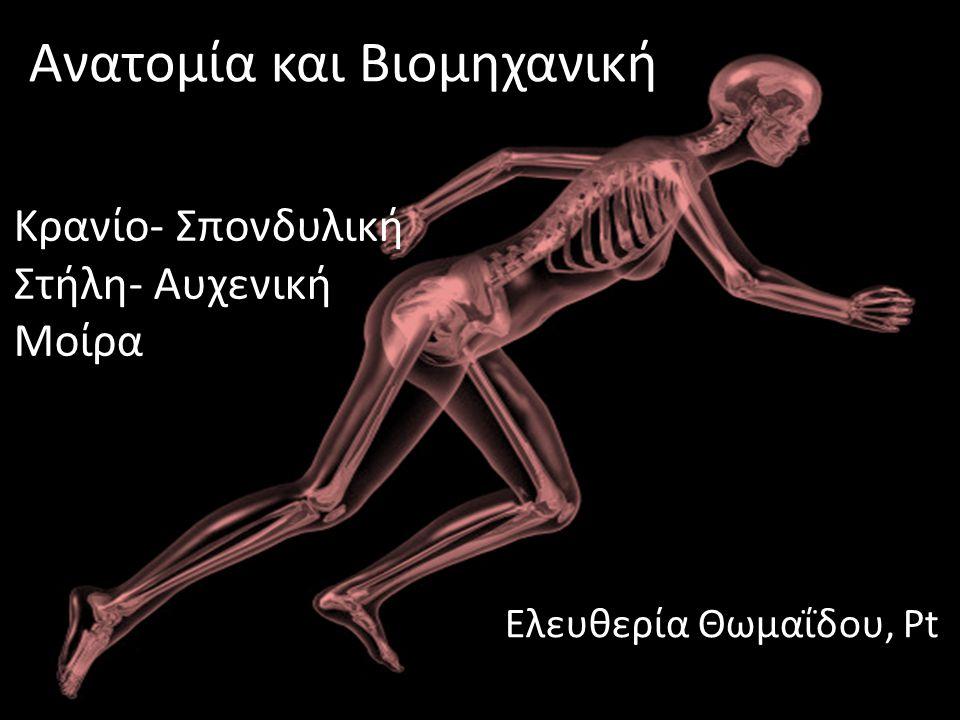 Μαθησιακά Αποτελέσματα Αναγνώριση των οστών του κρανίου και της σπονδυλικής στήλης και εντοπισμός τους στον ανθρώπινο σκελετό Περιγραφή της λειτουργίας της Σπονδυλικής Στήλης Περιγραφή της ανατομίας της Σ.Σ(Α.Μ.Σ.Σ) και των μεσοσπονδύλιων δίσκων Αναγνώριση των παρακείμενων αρθρώσεων Αναγνώριση και εντοπισμός μυών και συνδέσμων Α.Μ.ΣΣ