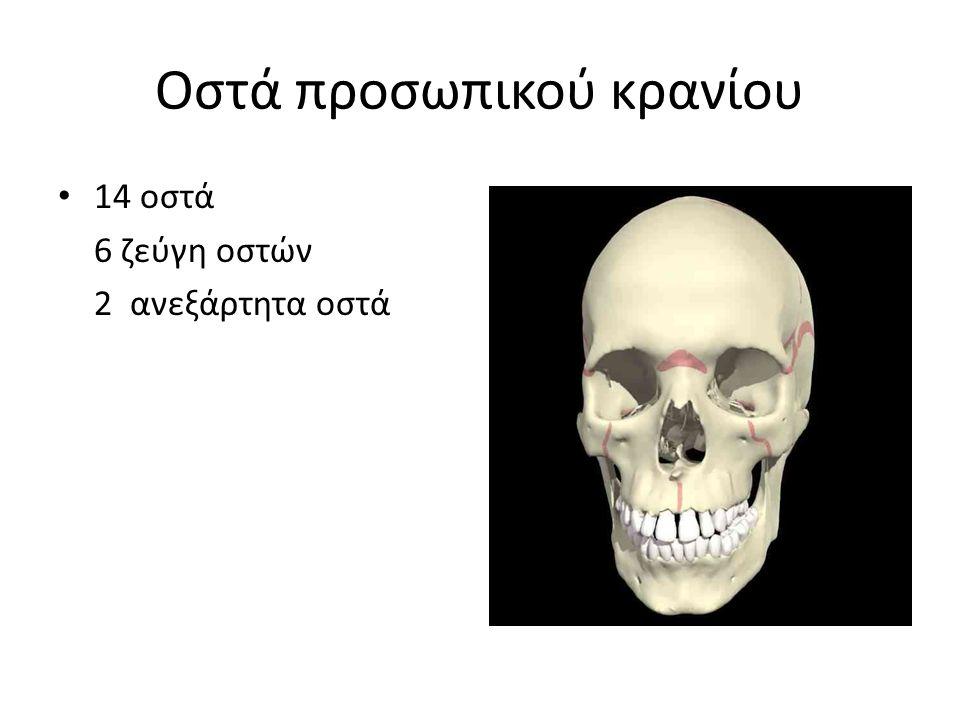 Οστά προσωπικού κρανίου 14 οστά 6 ζεύγη οστών 2 ανεξάρτητα οστά