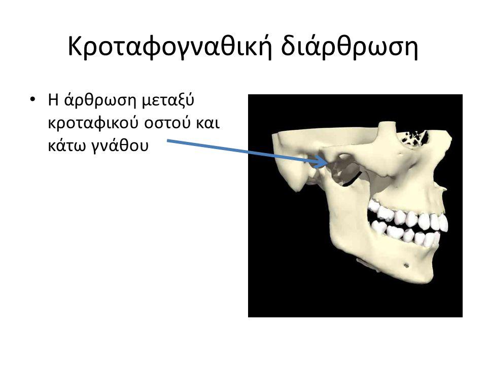Κροταφογναθική διάρθρωση Η άρθρωση μεταξύ κροταφικού οστού και κάτω γνάθου