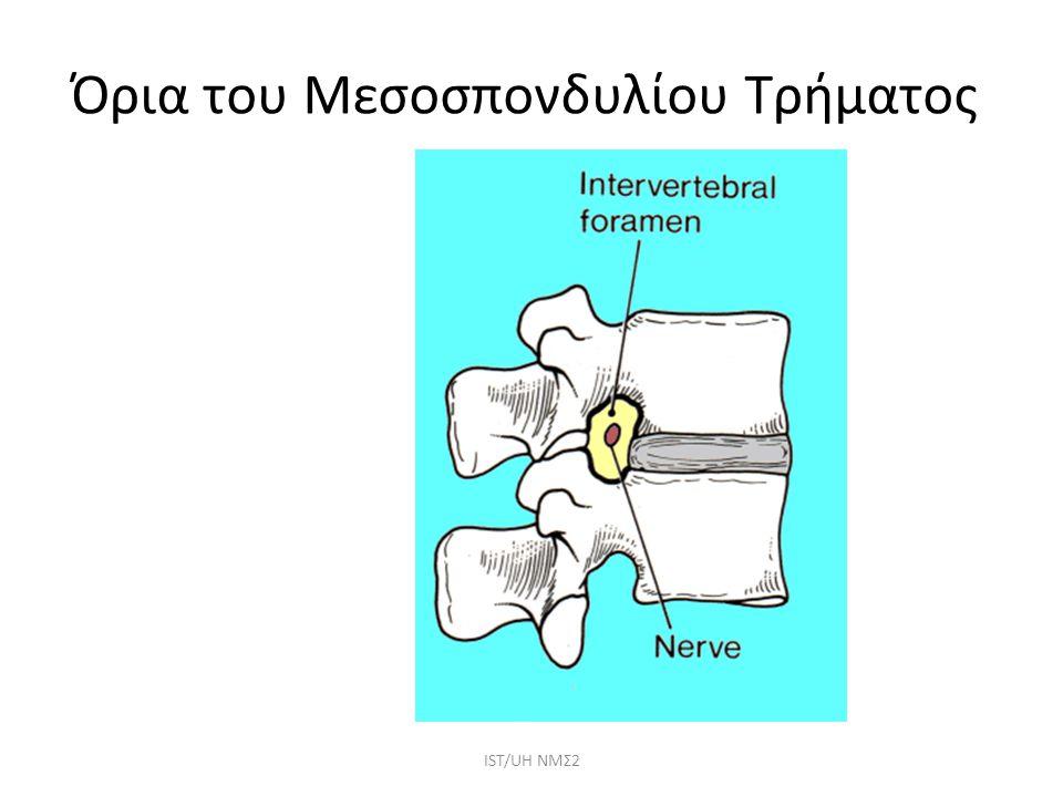 Όρια του Μεσοσπονδυλίου Τρήματος IST/UH NMΣ2