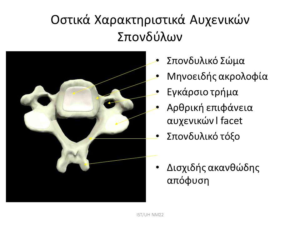 Οστικά Χαρακτηριστικά Αυχενικών Σπονδύλων Σπονδυλικό Σώμα Μηνοειδής ακρολοφία Εγκάρσιο τρήμα Αρθρική επιφάνεια αυχενικών l facet Σπονδυλικό τόξο Δισχι