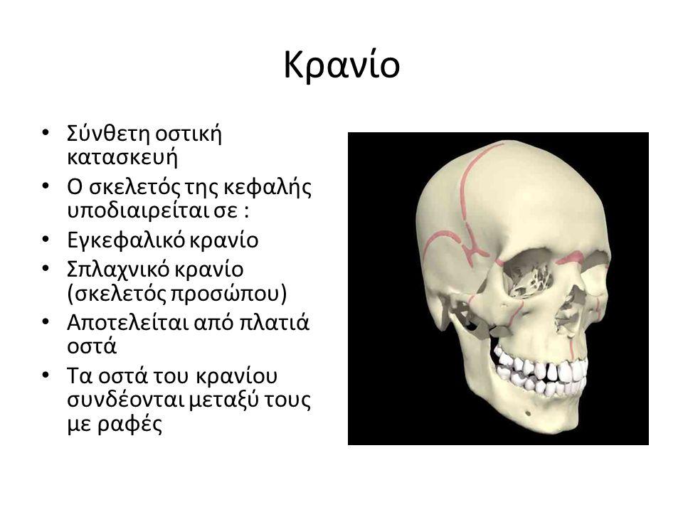 Κρανίο Σύνθετη οστική κατασκευή Ο σκελετός της κεφαλής υποδιαιρείται σε : Εγκεφαλικό κρανίο Σπλαχνικό κρανίο (σκελετός προσώπου) Αποτελείται από πλατι