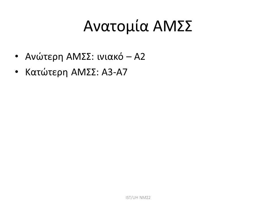 Ανατομία ΑΜΣΣ ΙST/UH NMΣ2 Ανώτερη ΑΜΣΣ: ινιακό – Α2 Κατώτερη ΑΜΣΣ: Α3-Α7