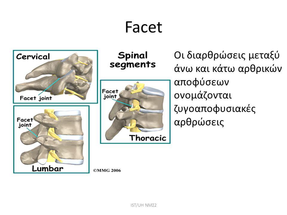 Facet Οι διαρθρώσεις μεταξύ άνω και κάτω αρθρικών αποφύσεων ονομάζονται ζυγοαποφυσιακές αρθρώσεις ΙST/UH NMΣ2