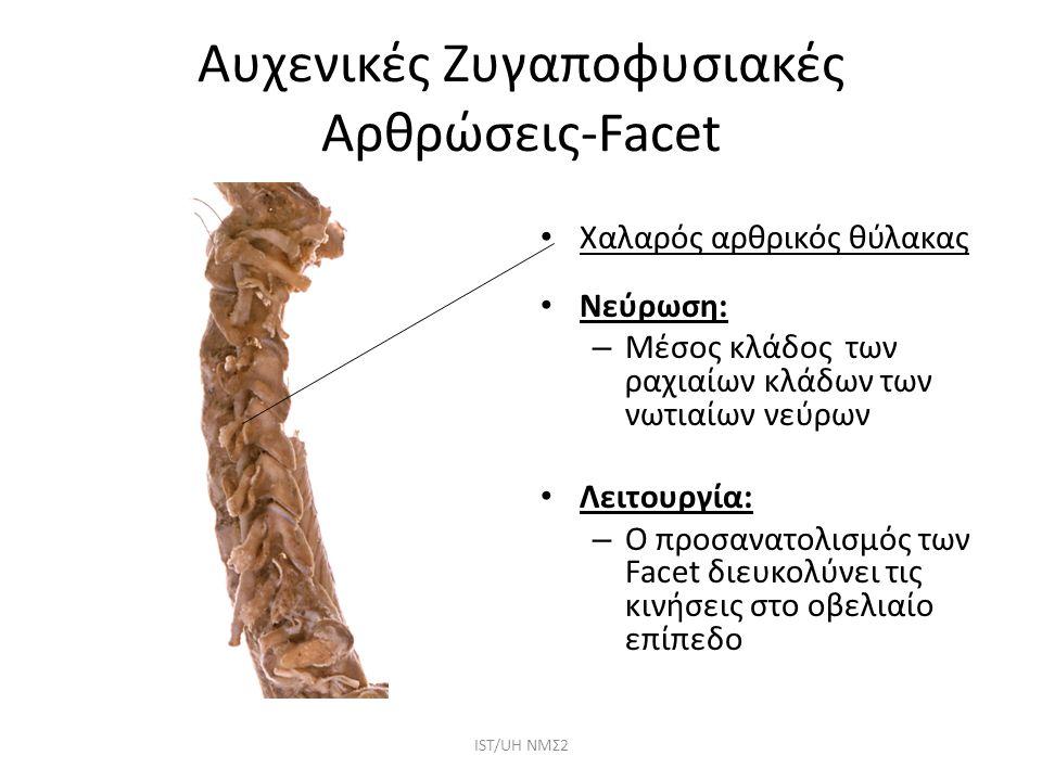 Αυχενικές Ζυγαποφυσιακές Αρθρώσεις-Facet Χαλαρός αρθρικός θύλακας Nεύρωση: – Μέσος κλάδος των ραχιαίων κλάδων των νωτιαίων νεύρων Λειτουργία: – Ο προσ