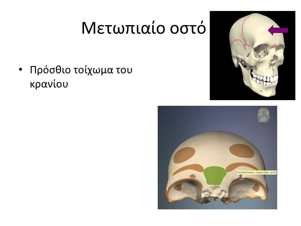 Όρια του Μεσοσπονδυλίου Τρήματος IST/UH NMΣ2 Πρόσθια: σπονδυλικό σώμα Άνωθεν: πέταλο σπονδύλου : Facet