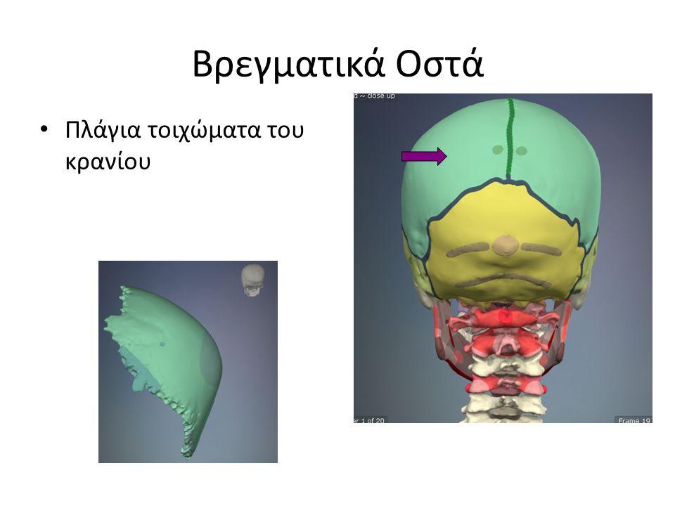 Κροταφικά οστά Κατώτερο τμήμα του πλάγιου τοιχώματος του κρανίου Στυλοειδής απόφυση Μαστοειδής απόφυση
