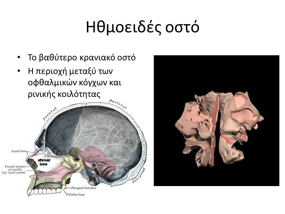 Ηθμοειδές οστό Το βαθύτερο κρανιακό οστό Η περιοχή μεταξύ των οφθαλμικών κόγχων και ρινικής κοιλότητας