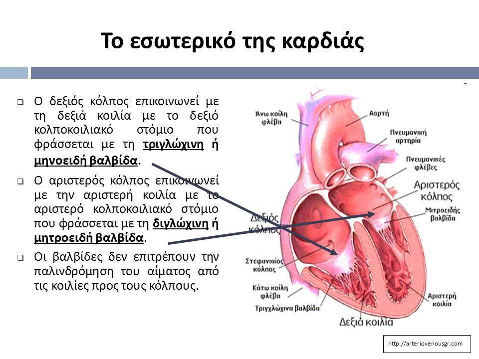  Ο δεξιός κόλπος επικοινωνεί με τη δεξιά κοιλία με το δεξιό κολποκοιλιακό στόμιο που φράσσεται με τη τριγλώχινη ή μηνοειδή βαλβίδα.  Ο αριστερός κόλ