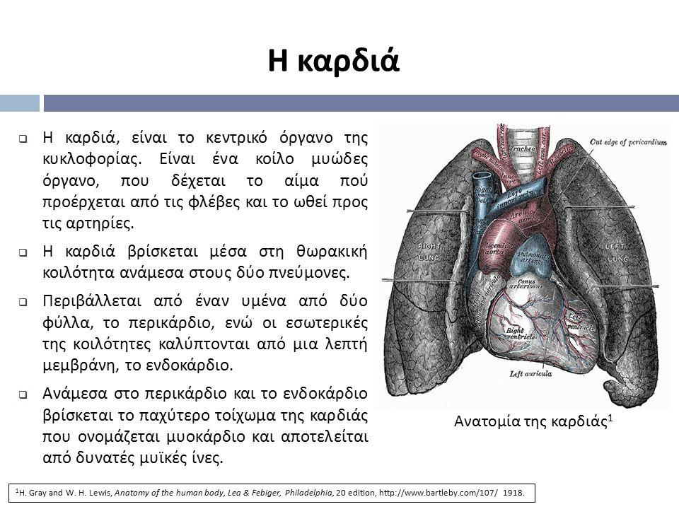 Η καρδιά  Η καρδιά, είναι το κεντρικό όργανο της κυκλοφορίας. Είναι ένα κοίλο μυώδες όργανο, που δέχεται το αίμα πού προέρχεται από τις φλέβες και το