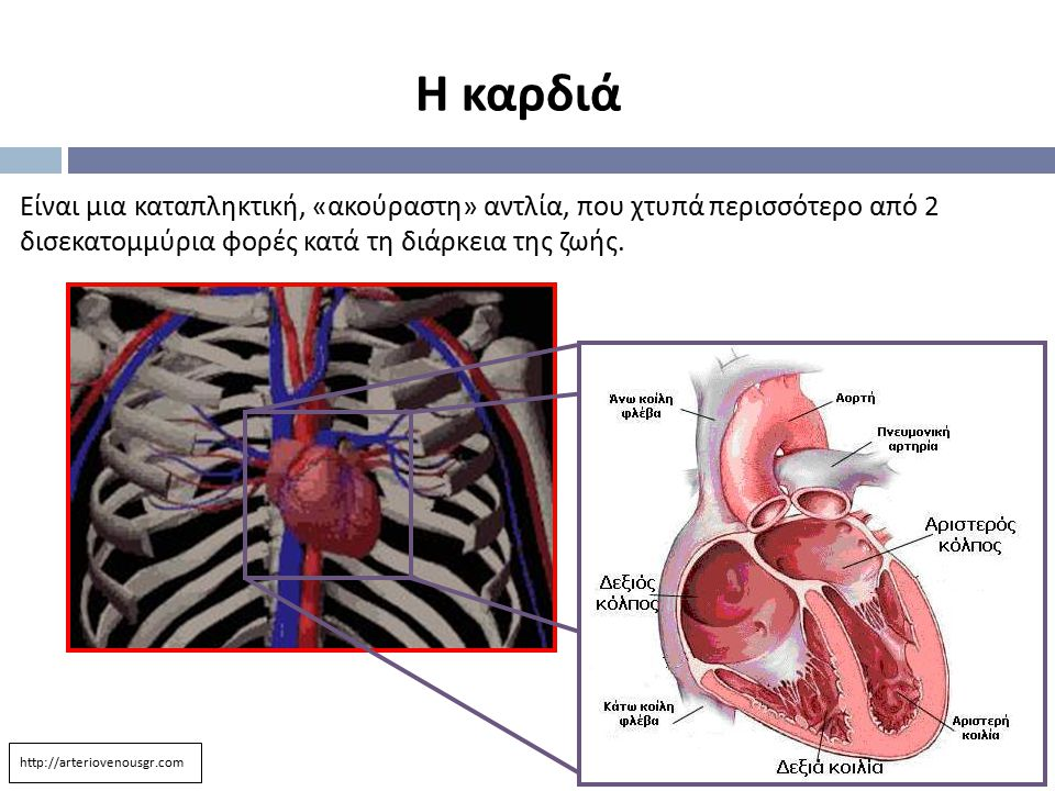 Είναι μια καταπληκτική, « ακούραστη » αντλία, που χτυπά περισσότερο από 2 δισεκατομμύρια φορές κατά τη διάρκεια της ζωής. Η καρδιά http://arteriovenou