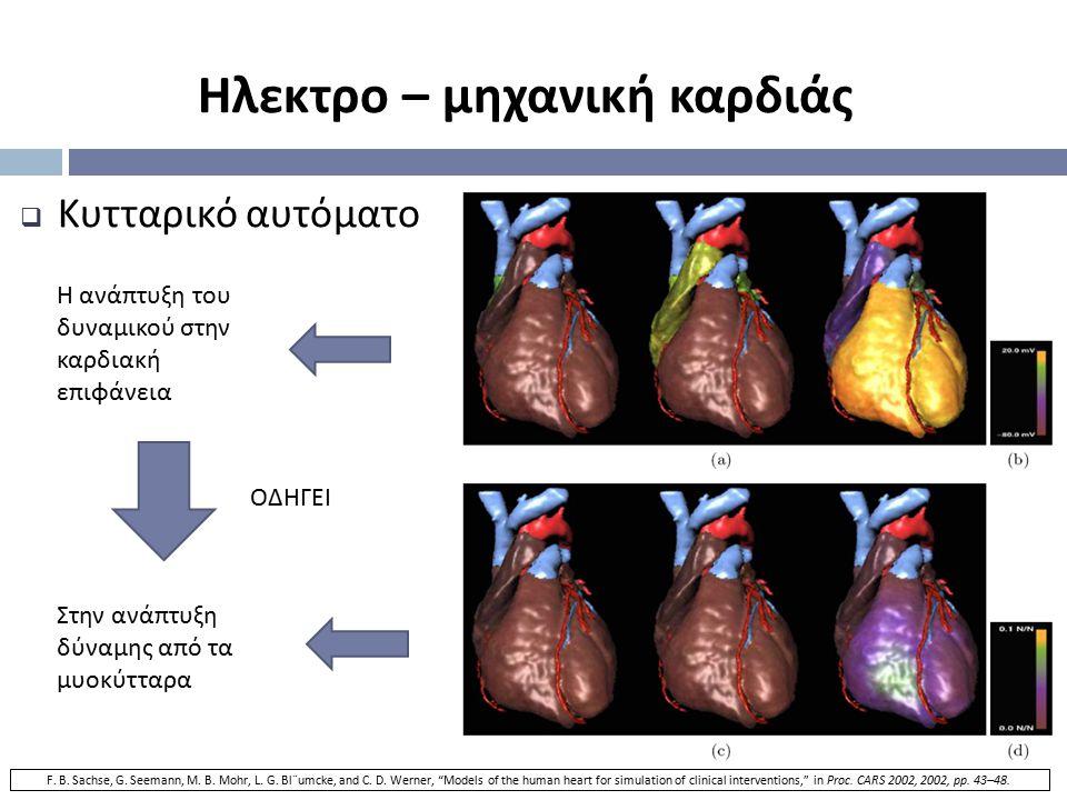  Κυτταρικό αυτόματο Η ανάπτυξη του δυναμικού στην καρδιακή επιφάνεια ΟΔΗΓΕΙ Στην ανάπτυξη δύναμης από τα μυοκύτταρα F. B. Sachse, G. Seemann, M. B. M