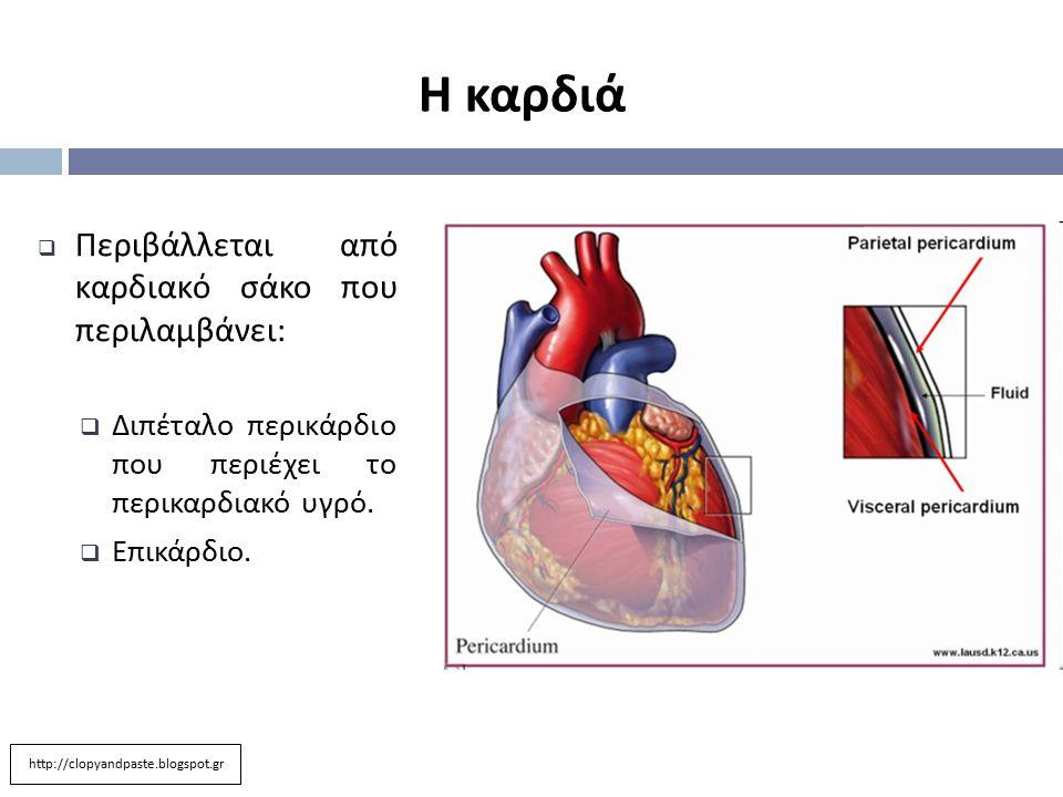  Περιβάλλεται από καρδιακό σάκο που περιλαμβάνει :  Διπέταλο περικάρδιο που περιέχει το περικαρδιακό υγρό.  Επικάρδιο. Η καρδιά http://clopyandpast