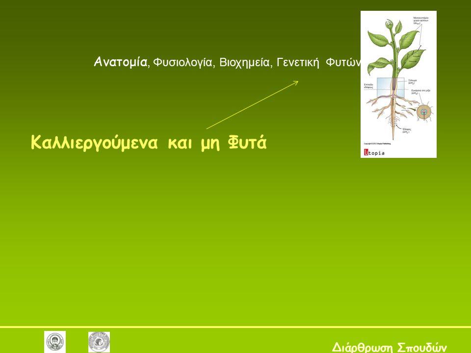 Καλλιεργούμενα και μη Φυτά Διάρθρωση Σπουδών Ανατομία, Φυσιολογία, Βιοχημεία, Γενετική Φυτών