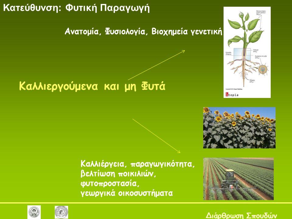 Καλλιεργούμενα και μη Φυτά Κατεύθυνση: Φυτική Παραγωγή Διάρθρωση Σπουδών Ανατομία, Φυσιολογία, Βιοχημεία γενετική Φυτών Καλλιέργεια, παραγωγικότητα, βελτίωση ποικιλιών, φυτοπροστασία, γεωργικά οικοσυστήματα
