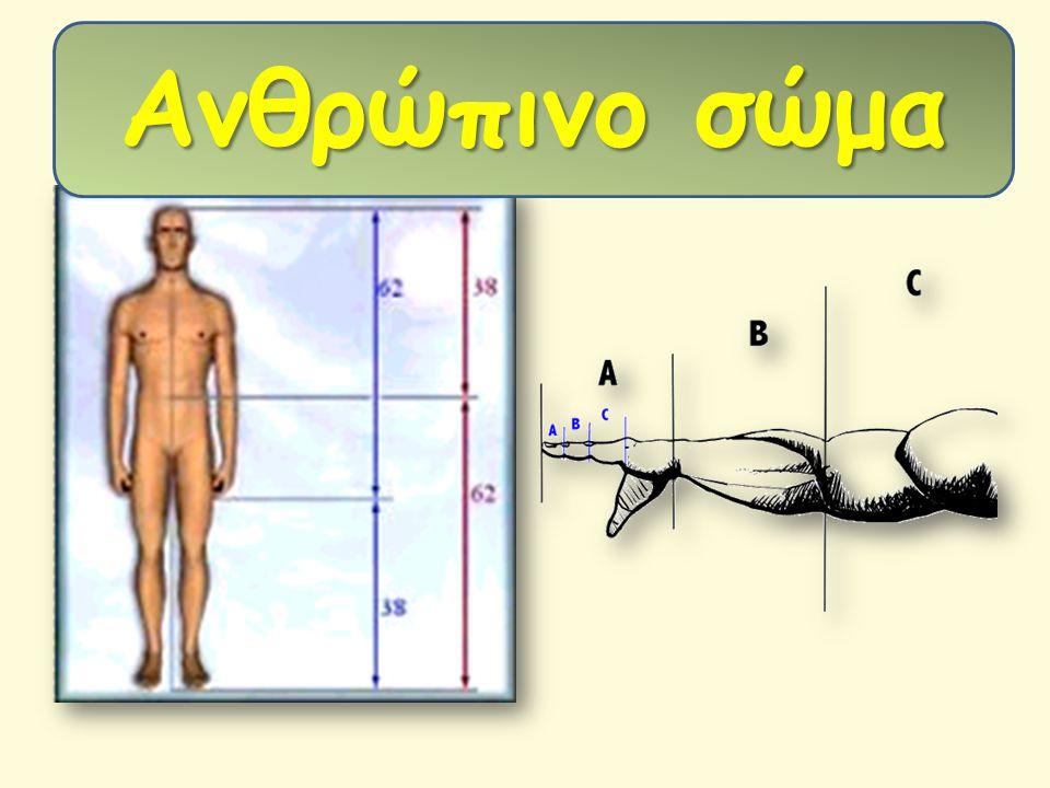 Ανθρώπινο σώμα