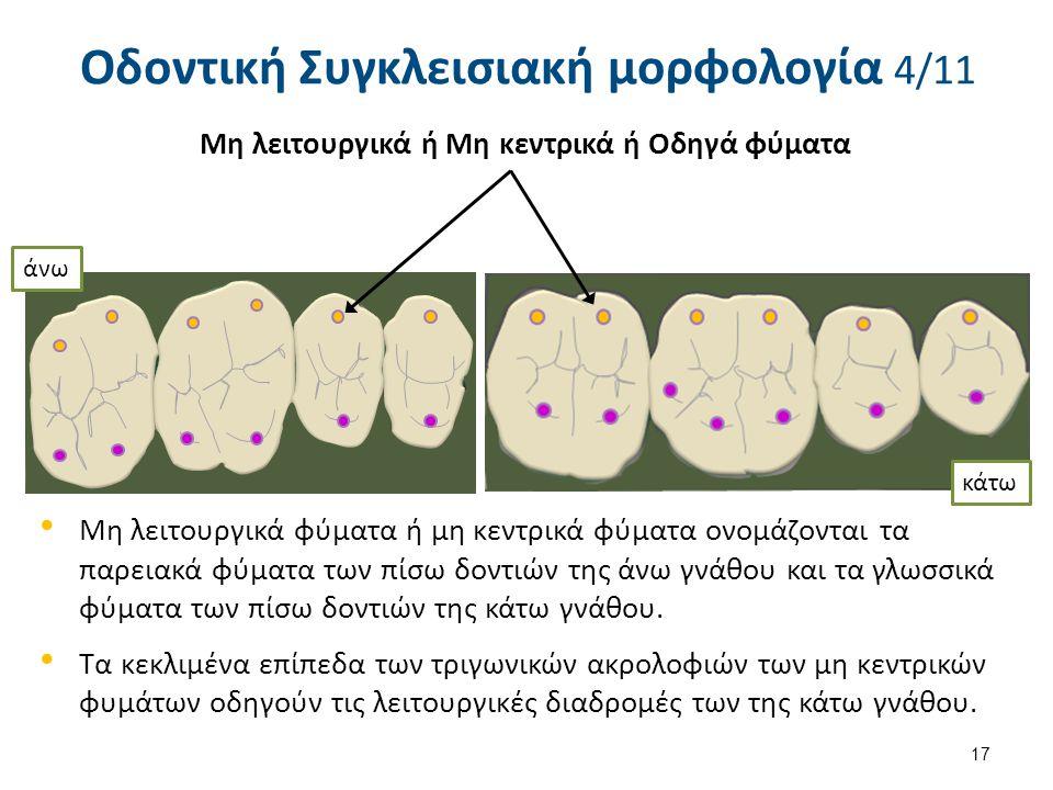 Μη λειτουργικά φύματα ή μη κεντρικά φύματα ονομάζονται τα παρειακά φύματα των πίσω δοντιών της άνω γνάθου και τα γλωσσικά φύματα των πίσω δοντιών της