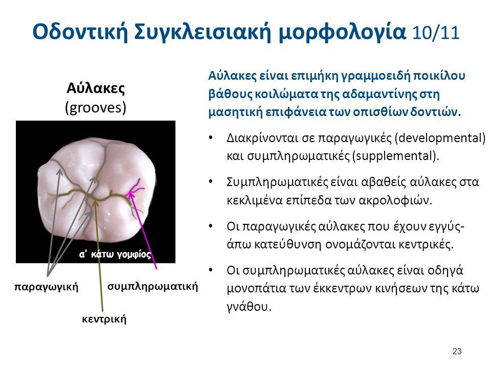 Αύλακες (grooves) 23 Οδοντική Συγκλεισιακή μορφολογία 10/11 Αύλακες είναι επιμήκη γραμμοειδή ποικίλου βάθους κοιλώματα της αδαμαντίνης στη μασητική επιφάνεια των οπισθίων δοντιών.