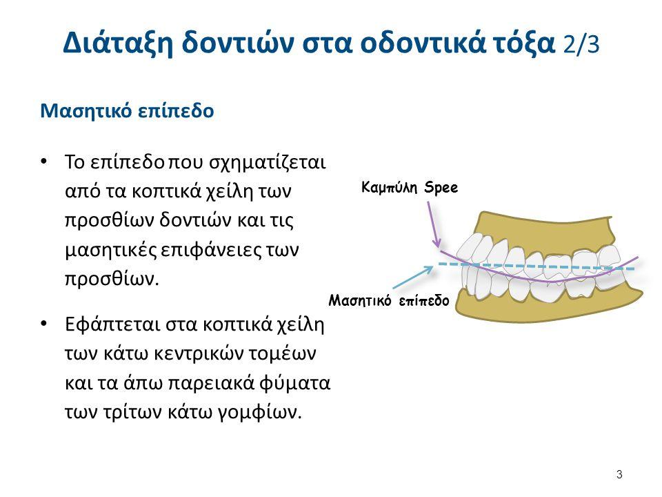 Μασητικό επίπεδο Το επίπεδο που σχηματίζεται από τα κοπτικά χείλη των προσθίων δοντιών και τις μασητικές επιφάνειες των προσθίων. Εφάπτεται στα κοπτικ