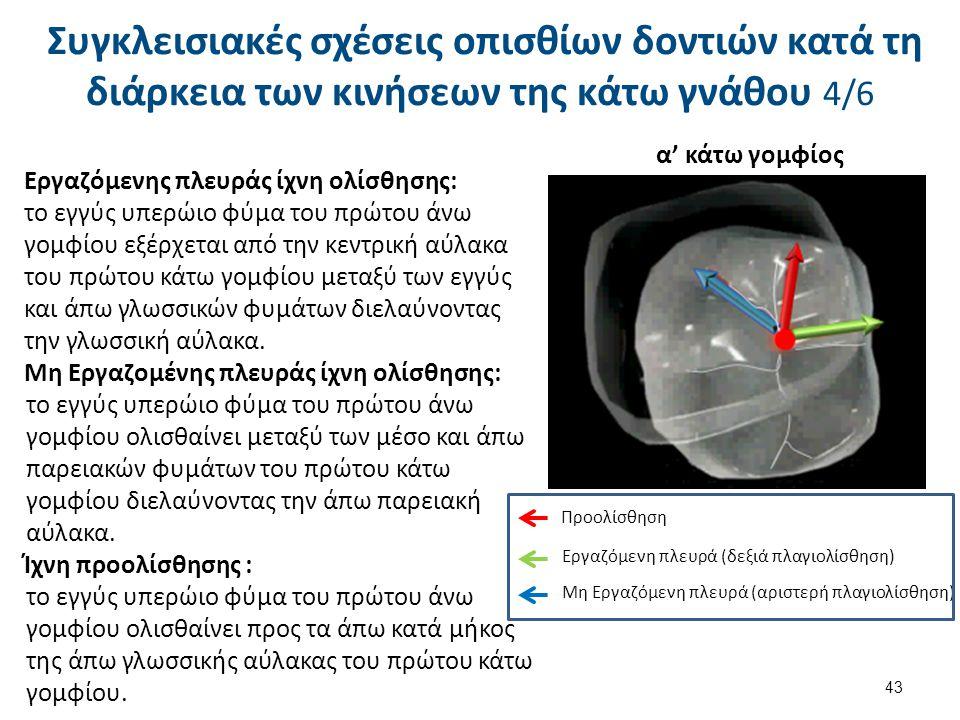 Εργαζόμενης πλευράς ίχνη ολίσθησης: το εγγύς υπερώιο φύμα του πρώτου άνω γομφίου εξέρχεται από την κεντρική αύλακα του πρώτου κάτω γομφίου μεταξύ των εγγύς και άπω γλωσσικών φυμάτων διελαύνοντας την γλωσσική αύλακα.