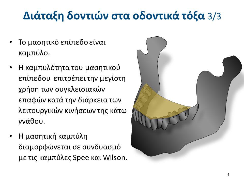 Το άνω οδοντικό τόξο είναι μακρύτερο από το κάτω οδοντικό τόξο.