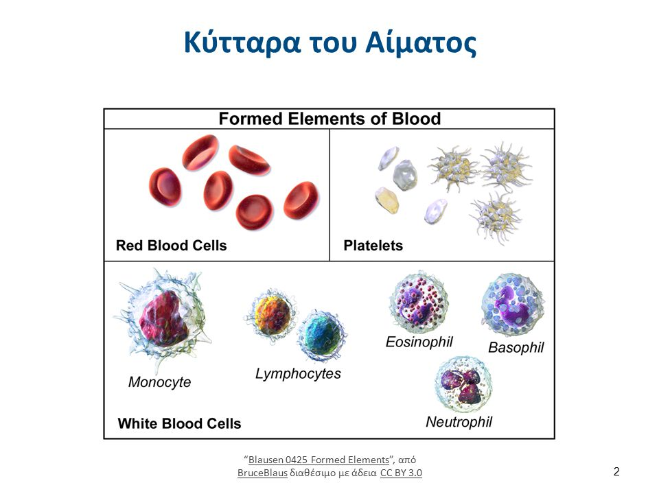 """Κύτταρα του Αίματος """"Blausen 0425 Formed Elements"""", από BruceBlaus διαθέσιμο με άδεια CC BY 3.0Blausen 0425 Formed Elements BruceBlausCC BY 3.0 2"""