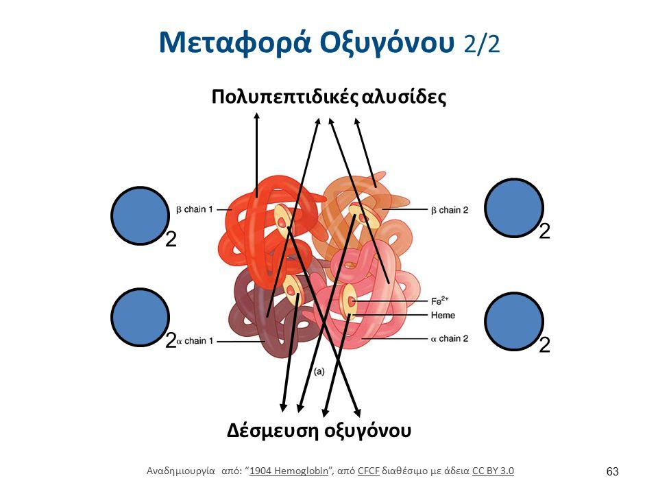 """Δέσμευση οξυγόνου Πολυπεπτιδικές αλυσίδες 2 2 2 2 Μεταφορά Οξυγόνου 2/2 63 Αναδημιουργία από: """"1904 Hemoglobin"""", από CFCF διαθέσιμο με άδεια CC BY 3.0"""