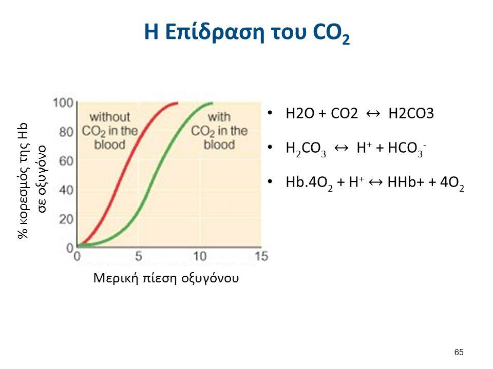 Μερική πίεση οξυγόνου % κορεσμός της Hb σε οξυγόνο H Επίδραση του CO 2 65