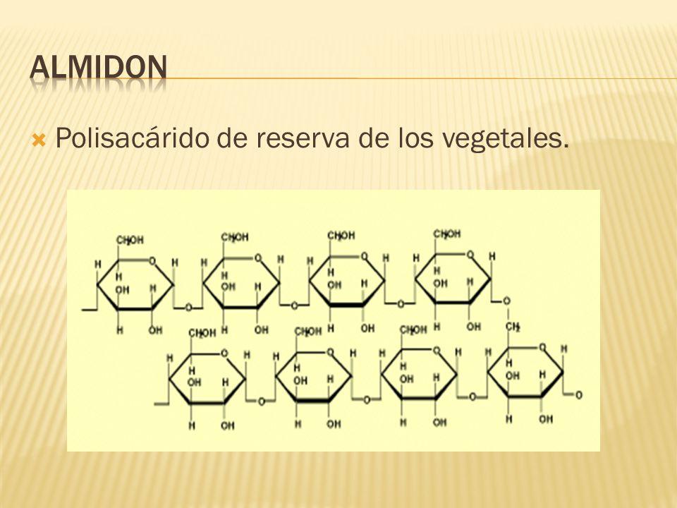  Polisacárido de reserva de los vegetales.