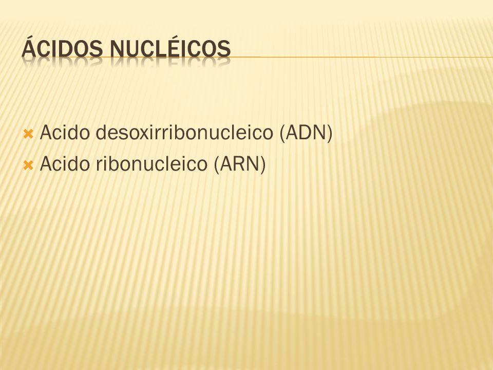  Acido desoxirribonucleico (ADN)  Acido ribonucleico (ARN)