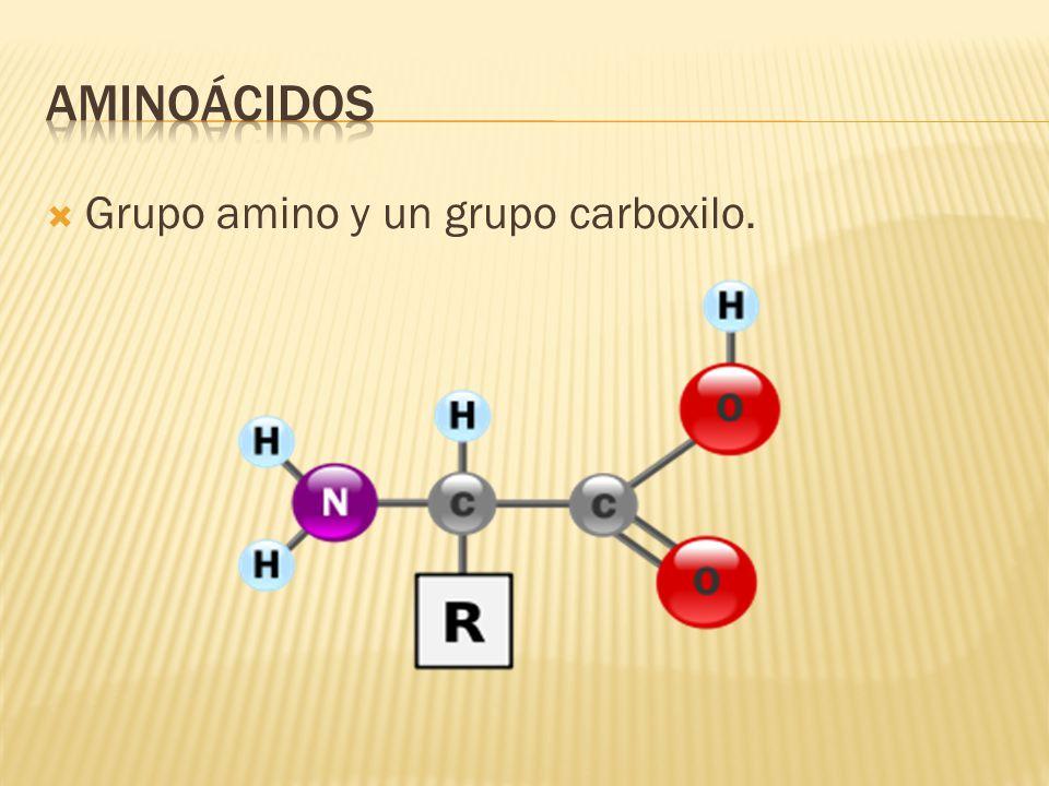  Grupo amino y un grupo carboxilo.