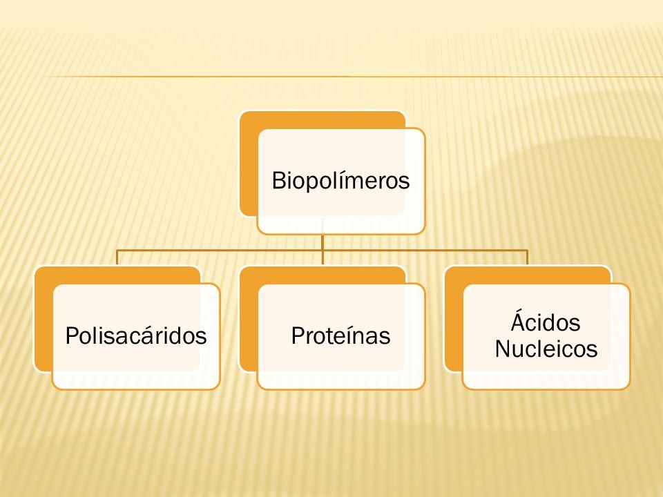 BiopolímerosPolisacáridosProteínas Ácidos Nucleicos