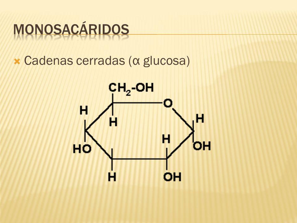 Cadenas cerradas (α glucosa)